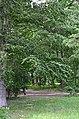 Восточная часть парка Нивки. Фото 23.jpg