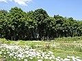 Дніпропетровський ботанічний сад 05.JPG