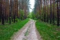 Дорога в лесу - panoramio (26).jpg