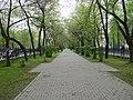 Екатеринбург, пр.Ленина, аллея, 19.05.2015 - panoramio.jpg