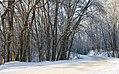Зима у «Холодному Яру». Поруч з Мотронинським монастирем. 24-й квартал Креселецького лісництва.jpg
