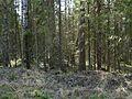 Лес - panoramio (5).jpg