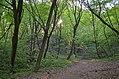 Лиса гора (Київ) 002.jpg