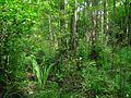 Лиственный лес - panoramio (1).jpg