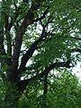 Лісопарк, Судакське л-во.jpg