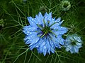 Літо в ботанічному саду ТНУ імені В. І. Вернадського,.jpg