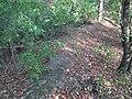 Міхалава, альбо Анёльская гара (01).jpg