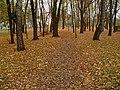 Новгород-Сіверський. Стежка у парку.JPG