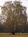 Украина, Киев - Голосеевский лес 144.jpg