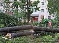 Уничтожение хвойного леса у жилых многоэтажных домов в поселении Кокошкино.jpg
