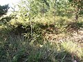 Хрипуновский могильник. Следы бугровщиков (2).JPG