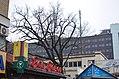 Шулявський дуб. Фото 2.jpg