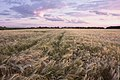 Этюд в пастельных тонах - panoramio.jpg