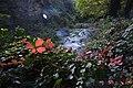 گیاهان در پاییز - باغ بوتانیکال تفلیس 15.jpg