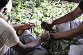 കുമ്മാട്ടി Kummattikali 2011 DSC 2548.JPG
