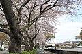 中山競馬場駐車場 - panoramio (1).jpg