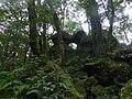 凱達格蘭遺跡恐龍親吻石 - Mapillary (BIWNmWbcJZDWgLaXWO0m1A).jpg
