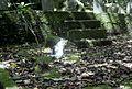 城山猫 - panoramio.jpg