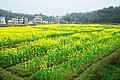 广州最美乡村—红山村 - panoramio (44).jpg