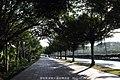 深南大道 Shen Nan Da Dao - panoramio (1).jpg