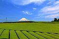 神戸の茶畑 - panoramio.jpg