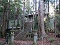 苗代田神社のモミ - panoramio.jpg