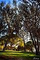 -Δάσος Στροφυλιάς -.jpg