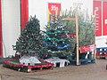 -2018-12-03 Christmas tree's for sale, Cromer (1).JPG