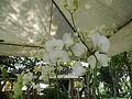 05593jfMidyear Orchid Exhibits Quezon Cityfvf 29.JPG