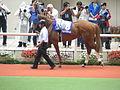 08 Nakayama Knight (June 23, 2013. 54th Takarazuka Kinen) (9117529880).jpg