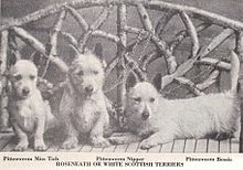 A black and white photo of three terriers