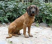 2005-09 Zoran 1.jpg