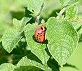 2006-07-16 larve4.jpg
