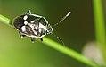 2011-04-18-insecte-2.jpg