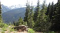 2011-08-11 Mount Rainier National Park 01.jpg