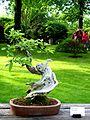 2012 kveten botanicka zahrada 066.JPG