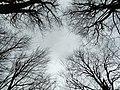 2013-02-03 16-11-09-arbres.jpg