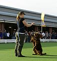 2013 Royal Melbourne Show (10017091814).jpg