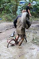 2013 Woodstock 121 rower w błocie.jpg