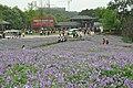 2014-04-04 石象湖 郁金香 liuzusai - panoramio (90).jpg
