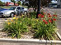 2014-08-02 11 52 38 Daylilies in Elko, Nevada.JPG
