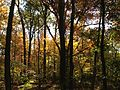 2014-10-30 12 41 54 Trees during autumn in the woodlands along the West Branch Shabakunk Creek in Ewing, New Jersey.JPG