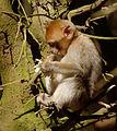 2016-04-21 13-53-43 montagne-des-singes.jpg