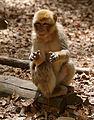 2016-04-21 14-11-56 montagne-des-singes.jpg