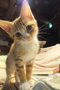 子猫の瞳。