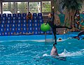 2017-05-16 Show in Kyiv Dolphinarium 22.jpg