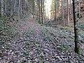 2017-11-24 (101) Leitengraben at Haltgraben, Frankenfels, Austria.jpg
