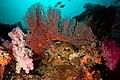 2018 fiji, 16 april, coral corner, pink corals and a fan (41148239904).jpg