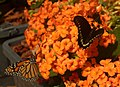 2019-04-15 13-06-31 jardin-papillons-hunawihr.jpg