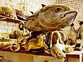 39 La Casa de les Esponges (Limassol), peixos dissecats.jpg